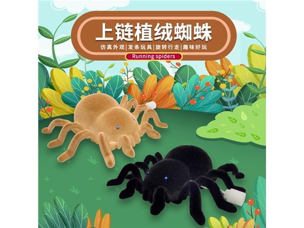 Upper chain flocking spider