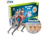 人体模型 科学实验玩具教具